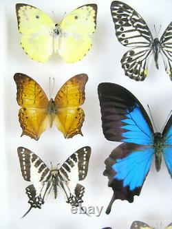 14 beautiful butterflies in 3D Box real taxidermy one-of-a-kind nice 10
