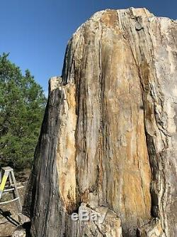 Giant Petrified Wood Tree Stump 8ft Tall Unique One of a kind fossilized fossil
