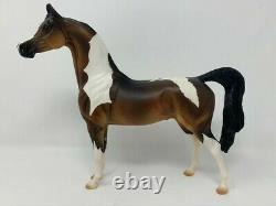 Peter Stone stunning test color Arab pinto ONE OF A KIND