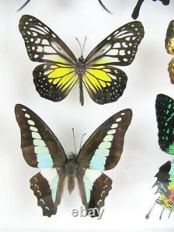 14 Beaux Papillons En Boîte 3d Réel Taxidermy Un-of-a-kind Gentil 10
