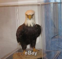 American Bald Eagle Unique En Son Genre Dans La Réplique Artistique De Qualité Muséale Mondiale