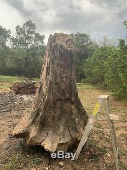 Souche D'arbre En Bois Pétrifié Géant, Unique En Hauteur, Unique En Son Genre, Fossile Fossilisé